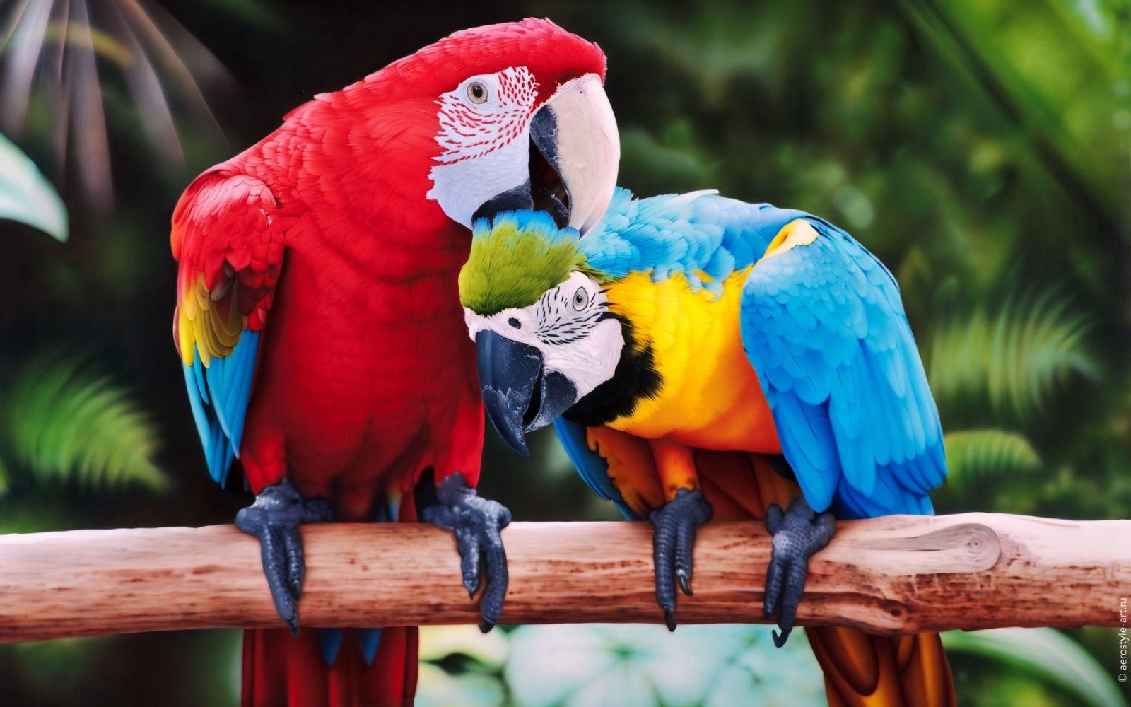 Картинки, картинки попугаев красивые